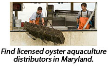 Locate oyster aquaculture facilities in Maryland