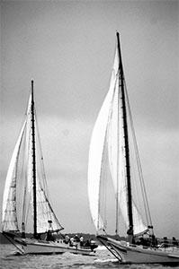 Skipjacks
